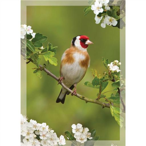 RSPB - Mini Notecard Pack (Goldfinch)