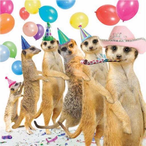 Pet Pawtrait Card - Conga (Birthday Card)