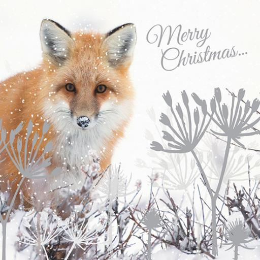 RSPB Small Square Christmas Card Pack - Festive Fox