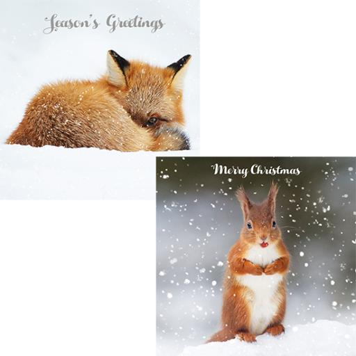 RSPB Luxury Christmas Card Pack - Christmas Foraging