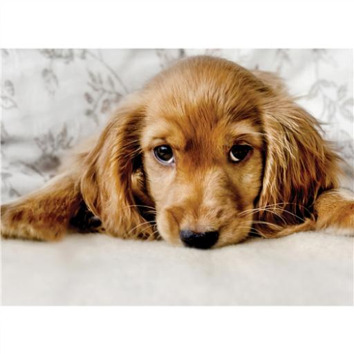 Animal Blank Card - Pup In A Slump