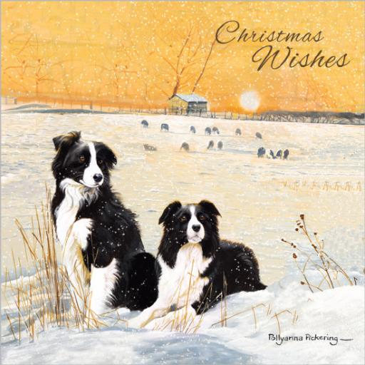 Charity Christmas Card Pack - Winter Collies