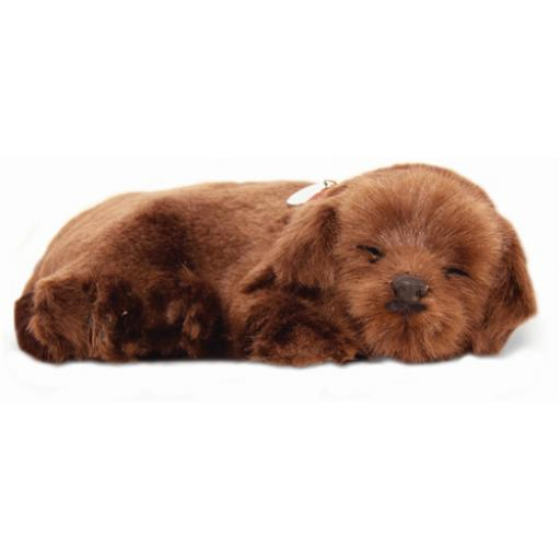 Precious Petzzz - Chocolate Labrador