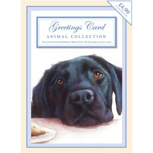 Bumper Box Card Assortment - Animal
