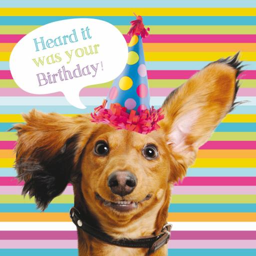 Pet Pawtrait Card - Sausage Dog Party (Birthday Card)