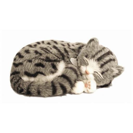 Precious Petzzz - Grey Tabby