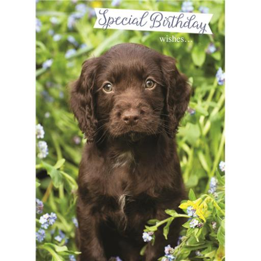 Animal Birthday Card - Chocolate Labrador Puppy