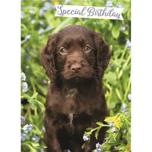 Animal Birthday Card - Chocolate Labrador Puppy