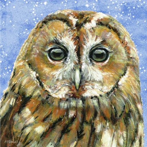 RSPB Small Square Christmas Card Pack - Owl