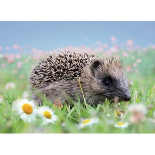 Animal Blank Card - Hedgehog