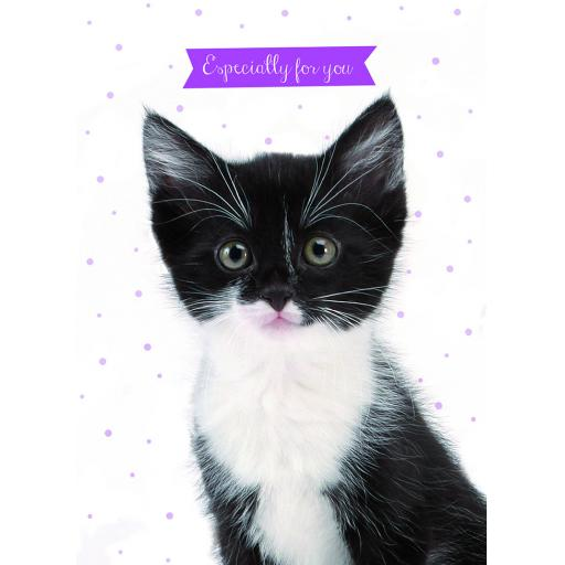 Animal Birthday Card - Cute Kitten