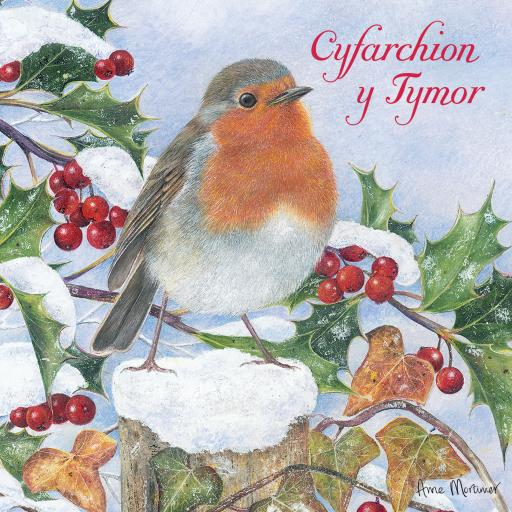 Welsh Christmas Cards (Small) - Winter Robin