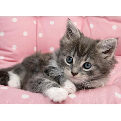 Animal Blank Card - Kitten On Pink