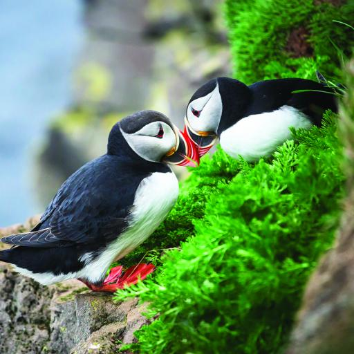 What On Earth (Plastic Free Cards) - Puffins