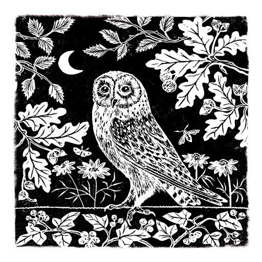 RSPB Natures Print Card - Owl & Moon