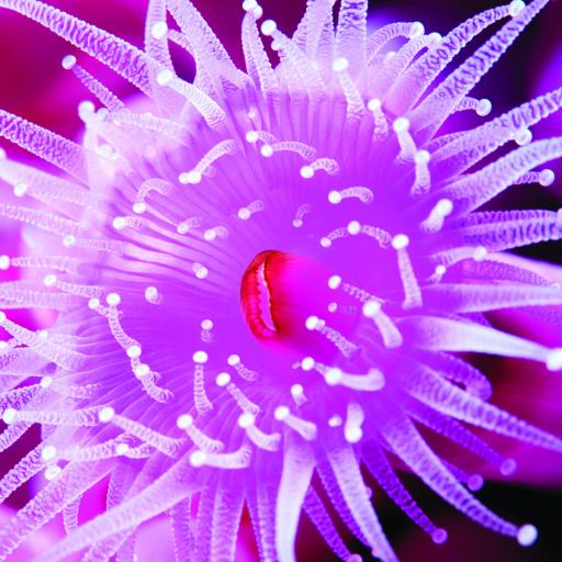 What On Earth (Plastic Free Cards) - Jewel Anemone