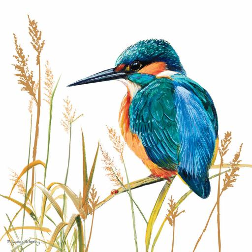 Pollyanna Pickering Countryside Collection Card - Kingfisher