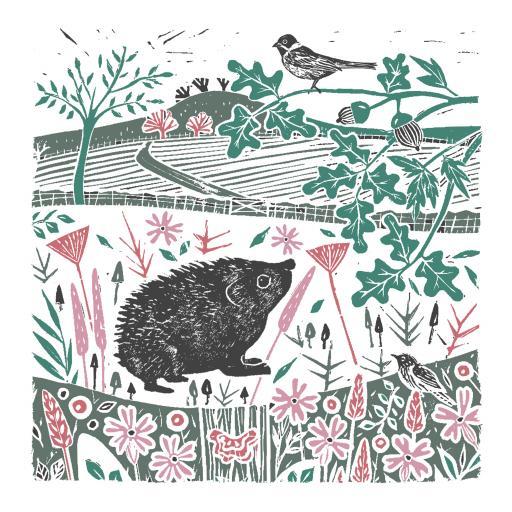 RSPB Natures Print Card - Hedgehog & Bird
