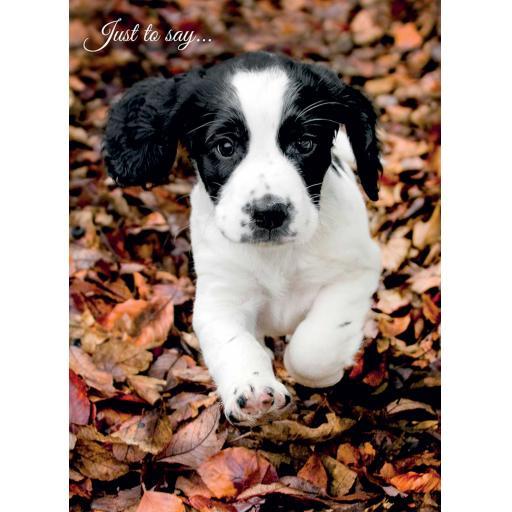 Animal Birthday Card - Springer Puppy