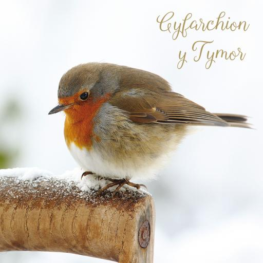 Welsh Christmas Cards (Large) - Resting Robin