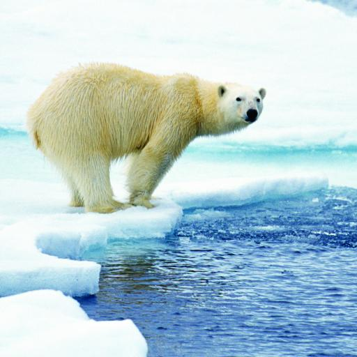 What On Earth (Plastic Free Cards) - Polar Bear