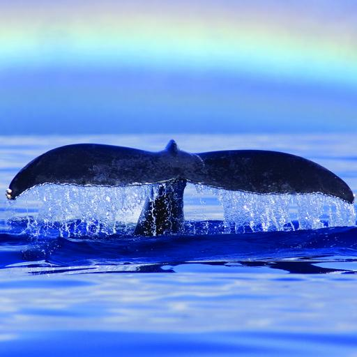 What On Earth (Plastic Free Cards) - Humpback Whale