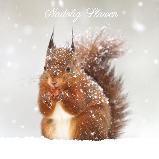 Welsh Christmas Cards (Large) - Squirrel
