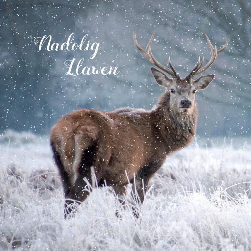 Welsh Christmas Cards (Small) - Snowy Stag