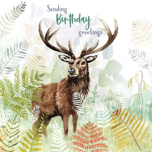 Wild & Serene Card Collection - Stag