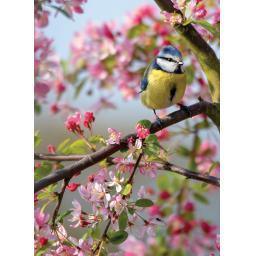 75219_BB_Floral-Blue-Tit_gc_y.jpg