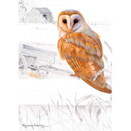 Notecard Pack - Owl