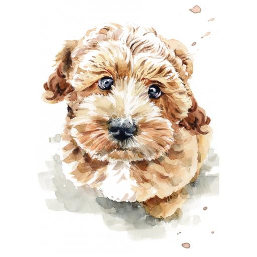 Notecard Pack - Cockapoo