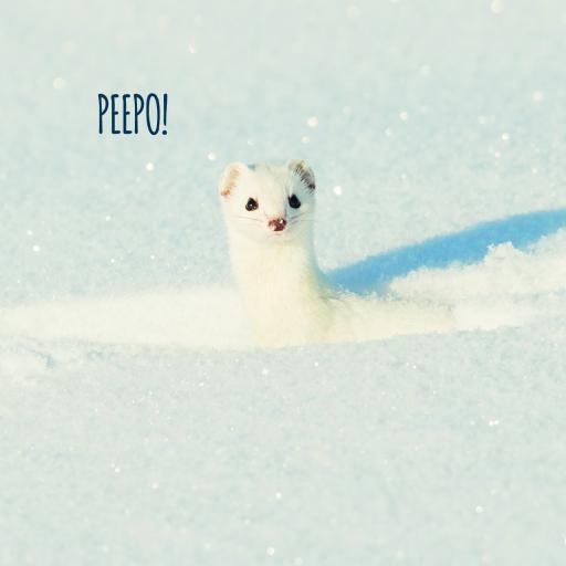 RSPB Small Square Christmas Card Pack - Winter Weasel