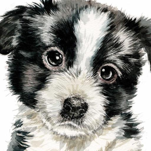 Puppy Dog Eyes Card Collection - Border Collie