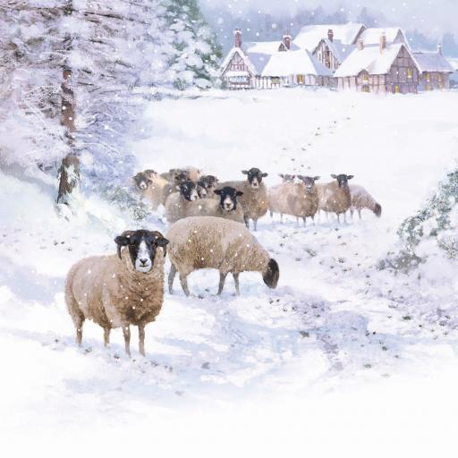 Charity Christmas Card Pack - Snowy Sheep