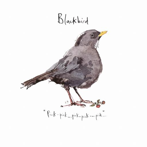 Madeleine Floyd - The Dawn Chorus - Blackbird