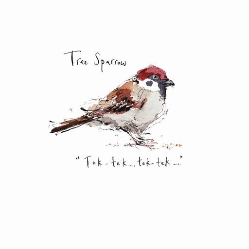Madeleine Floyd - The Dawn Chorus - Tree Sparrow