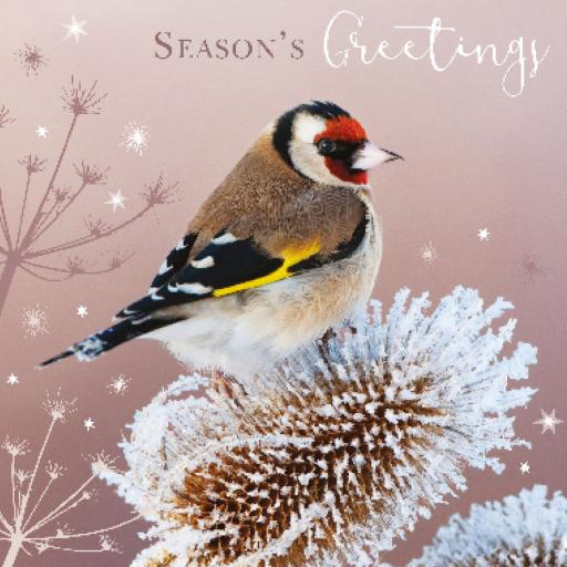 RSPB Small Square Christmas Card Pack - Frosty Goldfinch