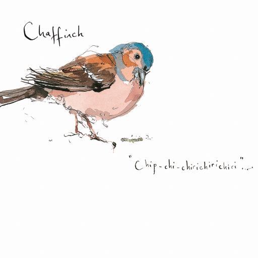 Madeleine Floyd - The Dawn Chorus - Chaffinch