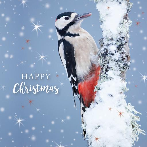 RSPB Small Square Christmas Card Pack - Snowy Woodpecker