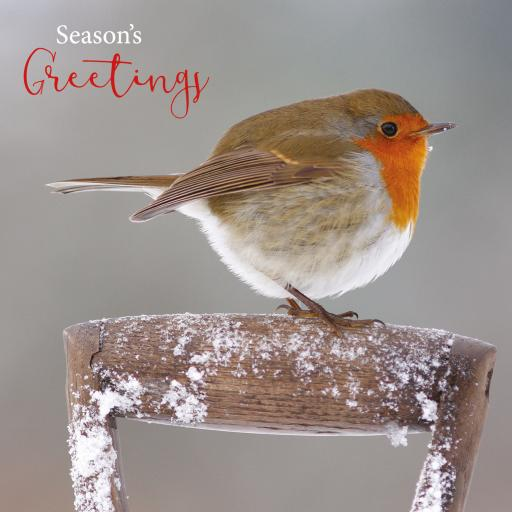 Charity Christmas Card Pack - Robin On Handle