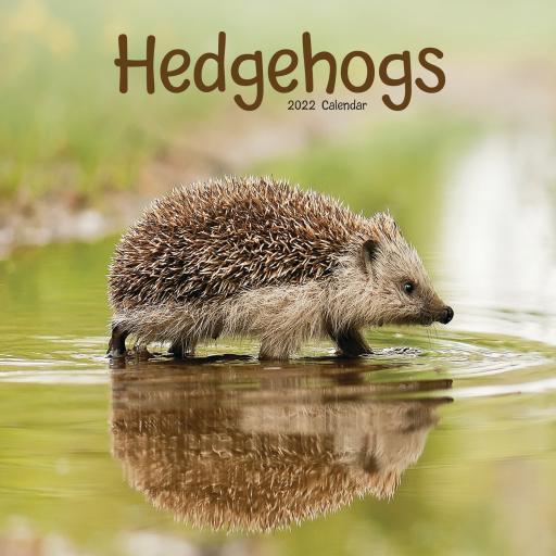 Hedgehogs Wall Calendar 2022