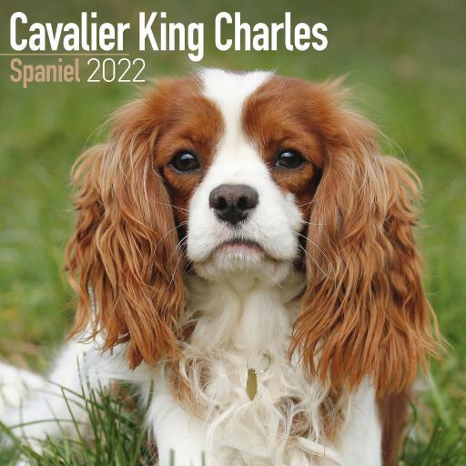 Cavalier King Charles Spaniel Wall Calendar 2022