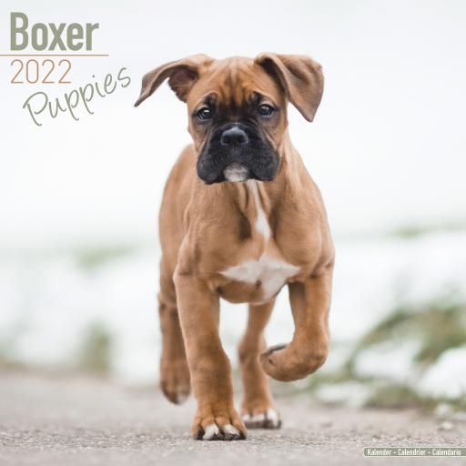 Boxer Puppies Wall Calendar 2022