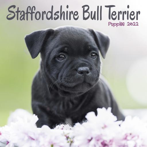Staffordshire Bull Terrier Puppies Mini Wall Calendar 2022