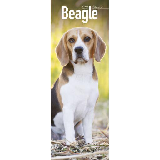 Beagle Slim Calendar 2022