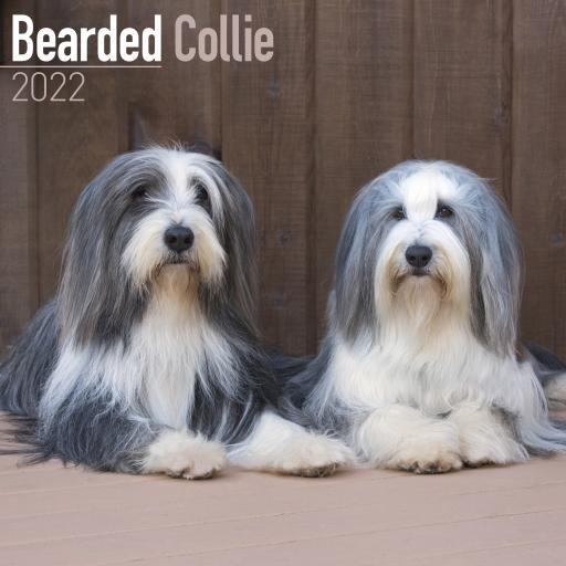 Bearded Collie Wall Calendar 2022