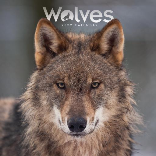 Wolves Mini Wall Calendar 2022