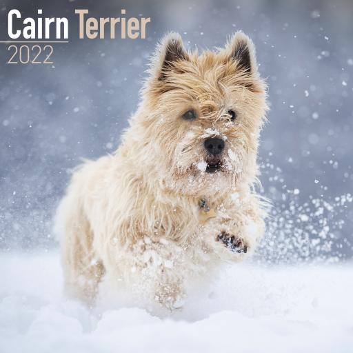 Cairn Terrier Wall Calendar 2022