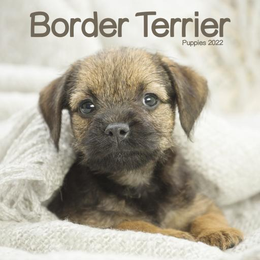 Border Terrier Puppies Mini Wall Calendar 2022